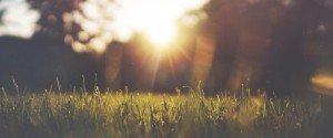 Gras im Sonnenlicht
